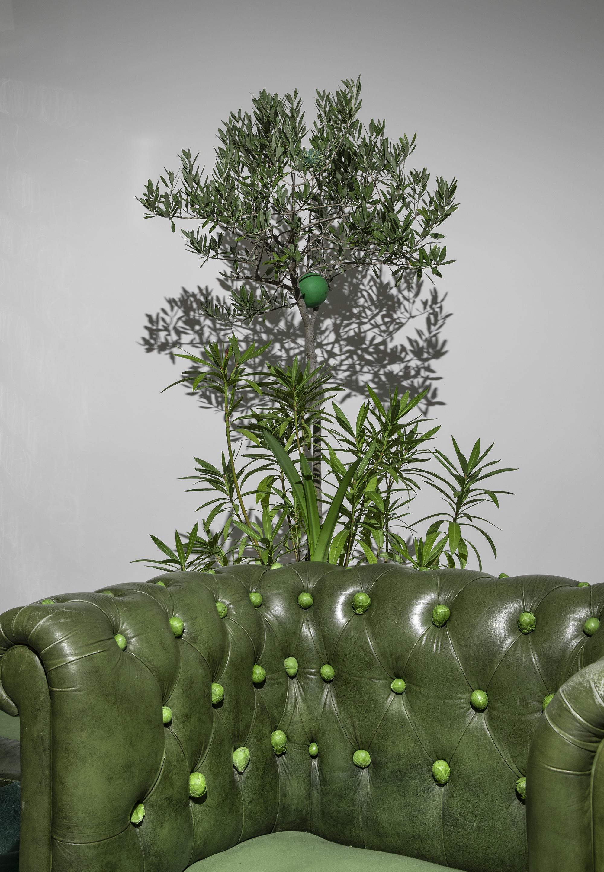 armchair Bruxelles sprouts