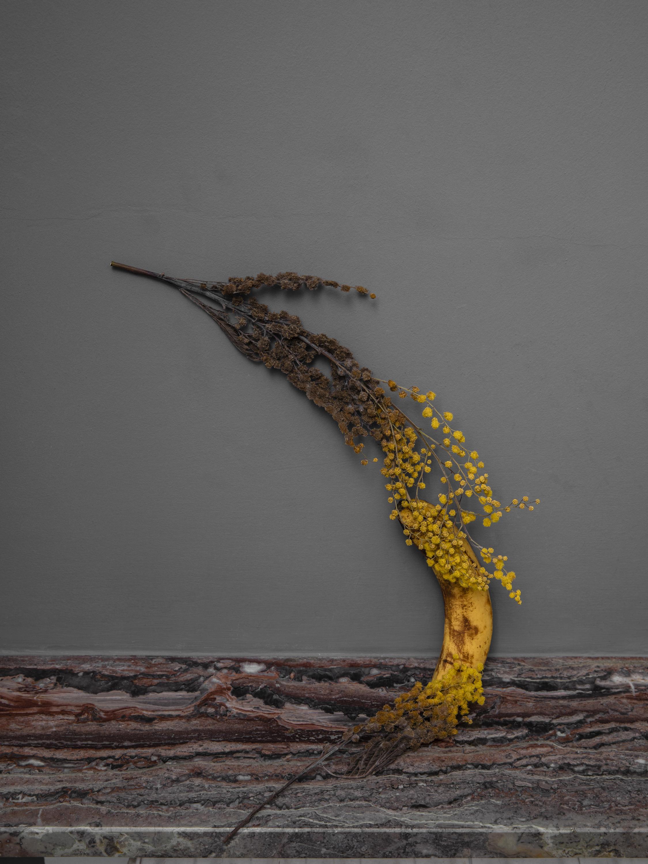 banana mimosa