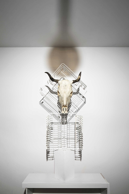 ox cow skull